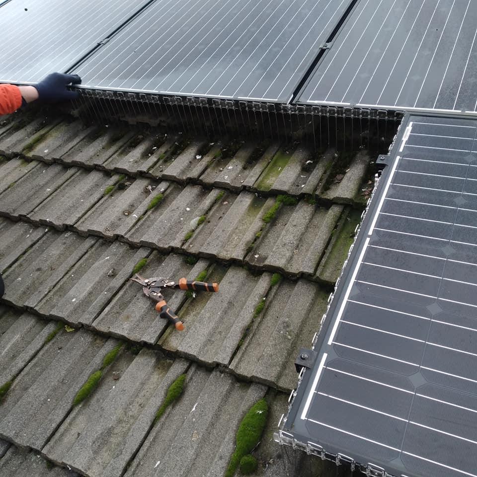 pigeon proof solar panels